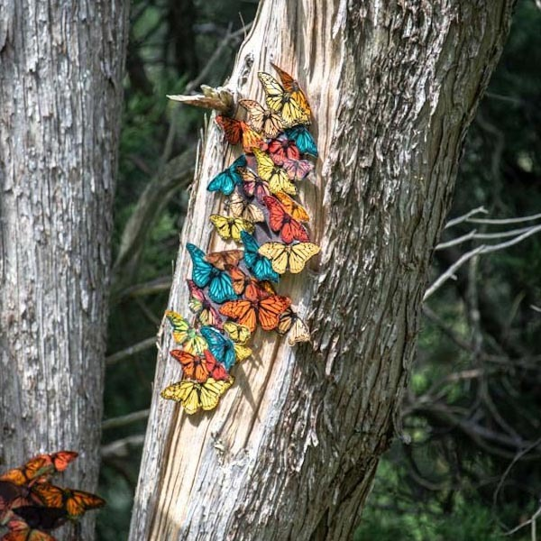 Parallel Migrations Colorful Butterflies